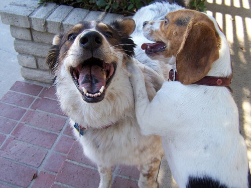 Two Happy Dogs by Rick Ortiz on Flickr